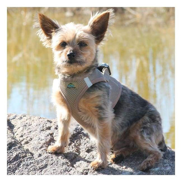 Dog Harness - Dog Harness American River Solid Ultra Choke Free Dog Harness Fossil Brown