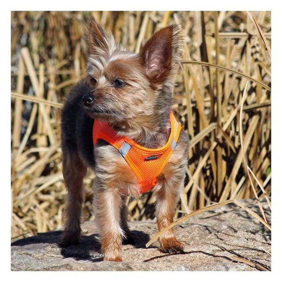 Dog Harness - Dog Harness American River Solid Ultra Choke Free Dog Harness Hunter Orange