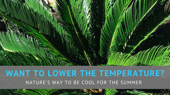Want to lower the temperature? Nature's way to be cool for the summer.