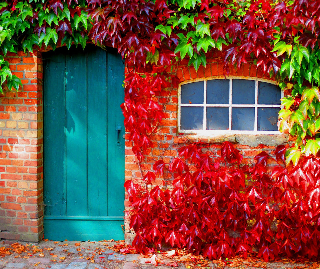 Top tips for autumn kerb appeal