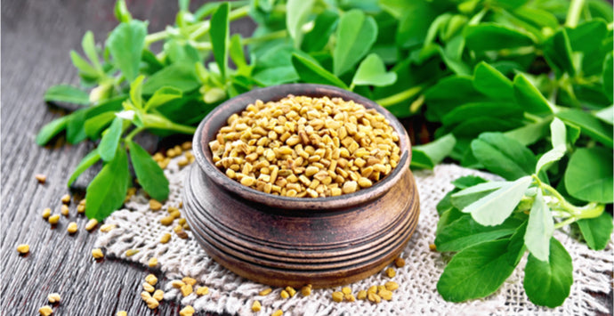 The Benefits of Fenugreek for Hair Growth