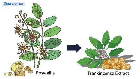 Why Frankincense Essential Oil Isn't as Good as Frankincense Extract?