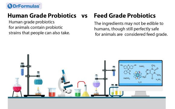 Are Human Probiotics the Best Probiotic Supplement for Dogs?