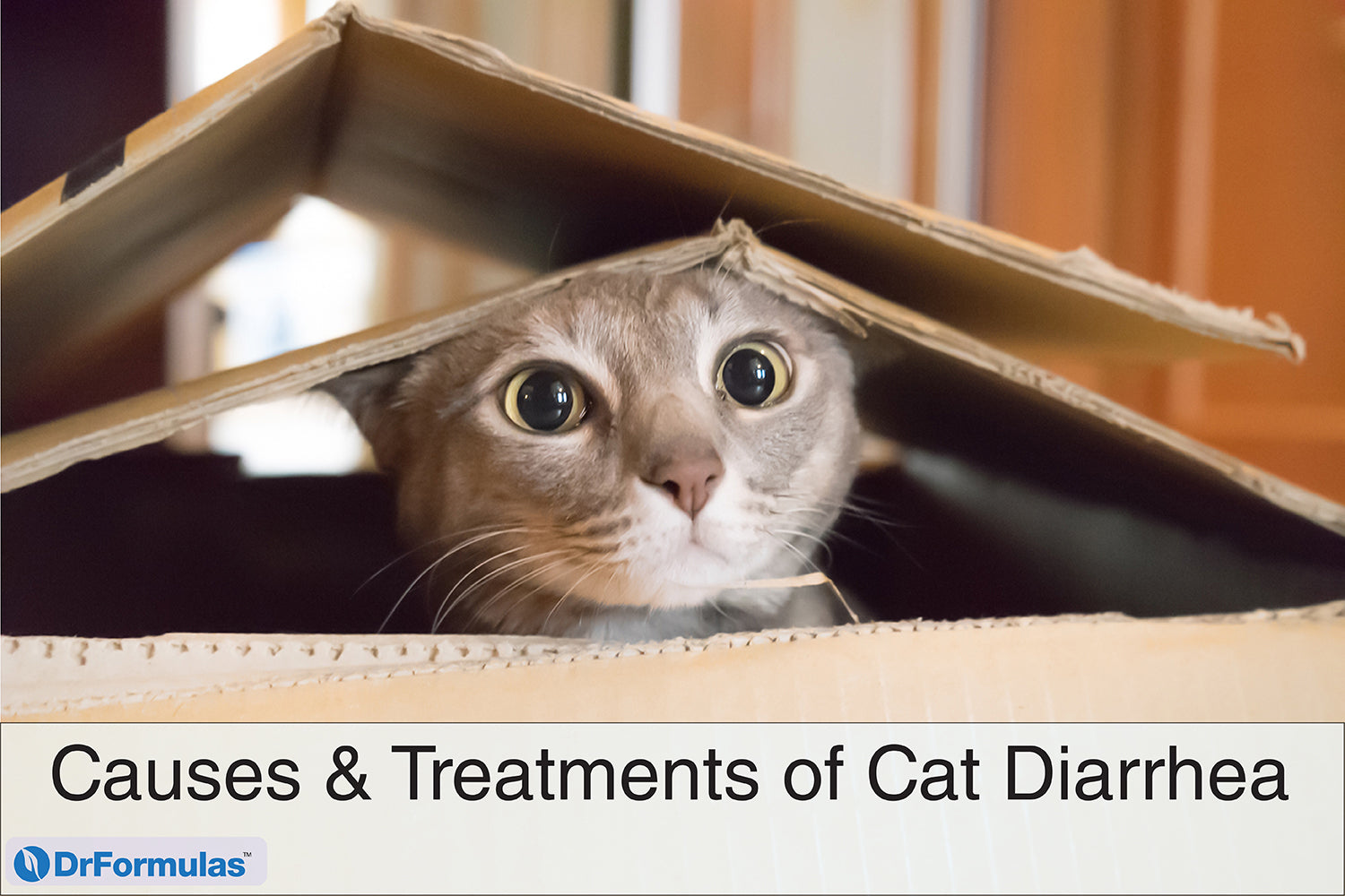 What to give the cat from diarrhea at home, what kind of medicine 2