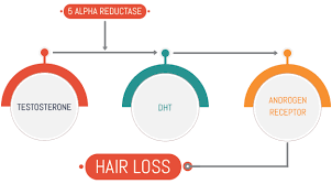 Does Masturbation Cause Hair Loss?