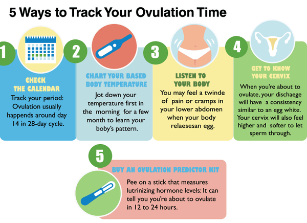 track your ovulation cycle to get pregnant