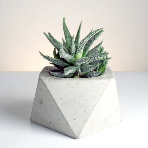 Large Square Antiprism Handmade Geometric Concrete Planter by Tri Geometrica on OOSTOR.com