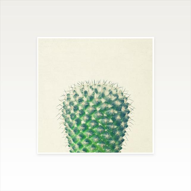 Cactus IV Photographic Art Print by Cassia Beck on OOSTOR.com