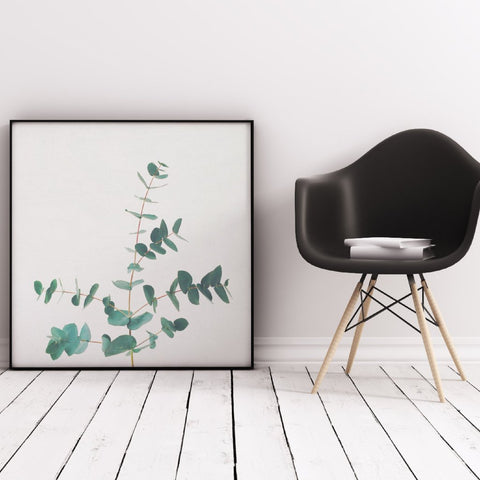 Eucalyptus Photographic Art Print by Cassia Beck on OOSTOR.com