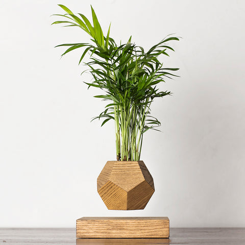 LePlant Classic Pot by Levitera on OOSTOR.com