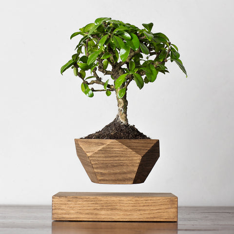 LePlant Floating Bonsai Pot - walnut | Levitating Plant Pot