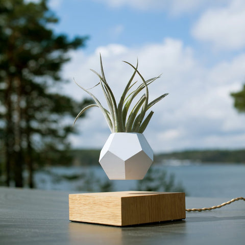 Lyfe Planter by Flyte on OOSTOR.com