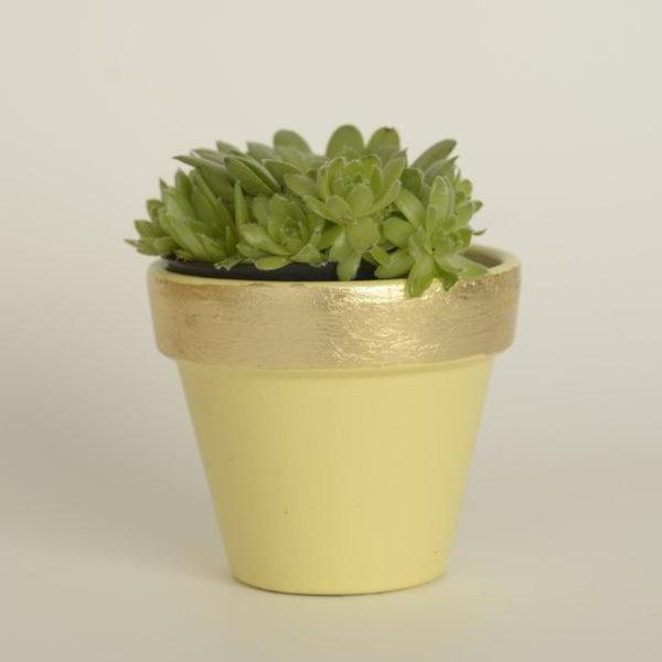 Medium Gilded Plant Pots by Elsker Creations on OOSTOR.com