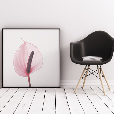 Pink Calla Lily Photographic Art Print by Cassia Beck on OOSTOR.com