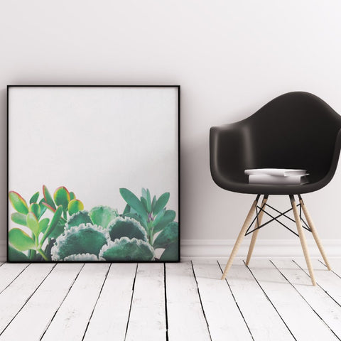 Plant Trio Photographic Art Print by Cassia Beck on OOSTOR.com
