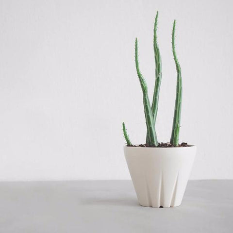 Yucca Planter by Yahalomis on OOSTOR.com