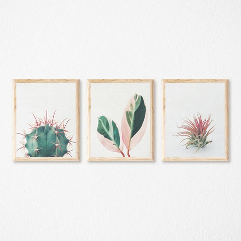 Set of Three Botanical Prints by Cassia Beck on OOSTOR.com