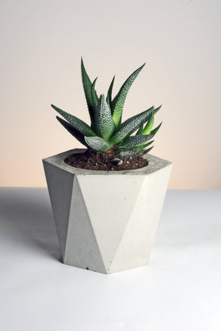 Hexagonal Antiprism Handmade Geometric Concrete Planter by Tri Geometrica on OOSTOR.com