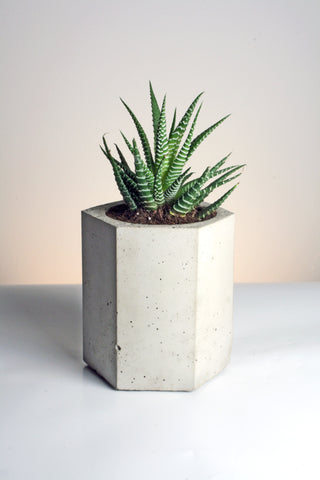 Tall Hexagonal Handmade Geometric Concrete Planter by Tri Geometrica on OOSTOR.com