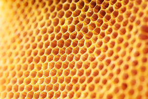 5 Delicious Reasons Why Honeycomb Needs to be Part of Your Diet