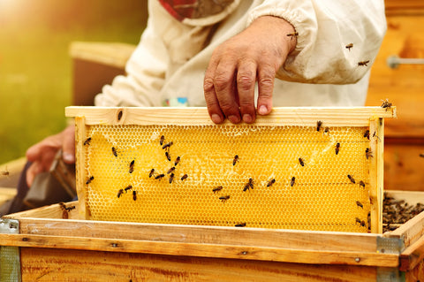 How Honey is made by bees - natural and healthy honey