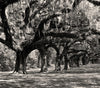 Boone Hall Plantation, Mt Pleasant - South Carolina