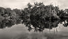 New Orleans City Park, Reflections on Big Lake, Black and White Photograph - Black and White Photography by Andy Moine