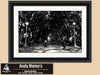 Hyde Park, Sydney Australia, Back & White Photo, Framed Print