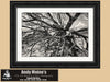 Jekyll Island Driftwood, St Simons Island, Georgia, Black and White Photo, Framed Print