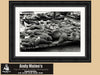 Pier 39 Sea Lions, San Francisco California, Framed Black and White Print