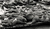 Pier 39 Sea Lions, San Francisco - California, Black and White Print