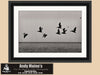 Brown Pelicans,  Bombay Beach, Salton Sea, California, Black and White Photo, Framed Print