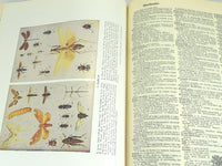 Vintage Large Webster Dictionary with Color Maps and Pictures Approx. 2300 Pages - ChaseyBlueVintage
