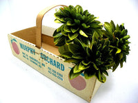 Orchard Produce Basket Box Cardboard and Wood Construction - ChaseyBlueVintage