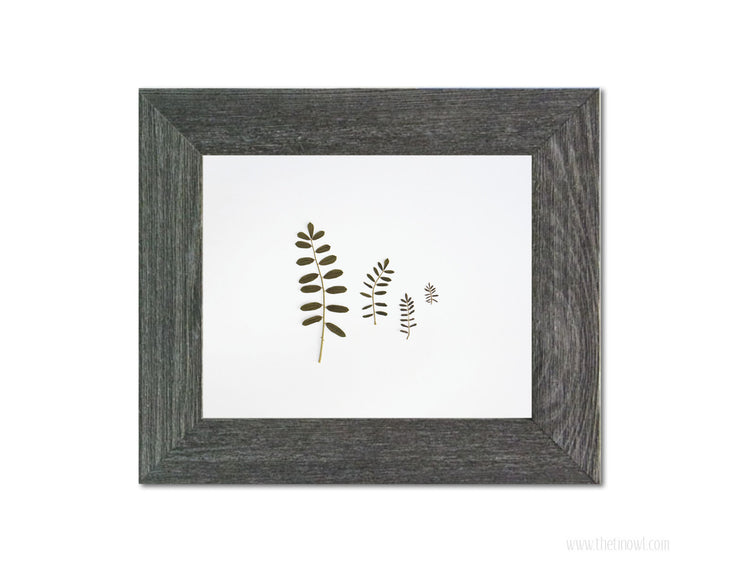 Botanical Art | Leaf Photography