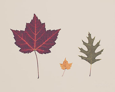 SALE - Fall Leaves - Print