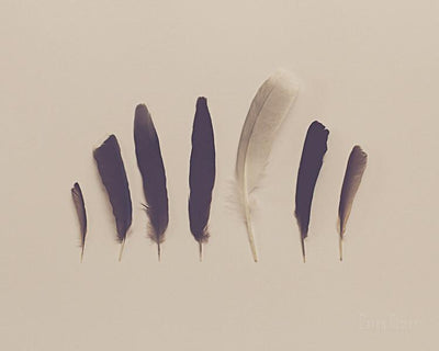 SALE - Feathers - Print