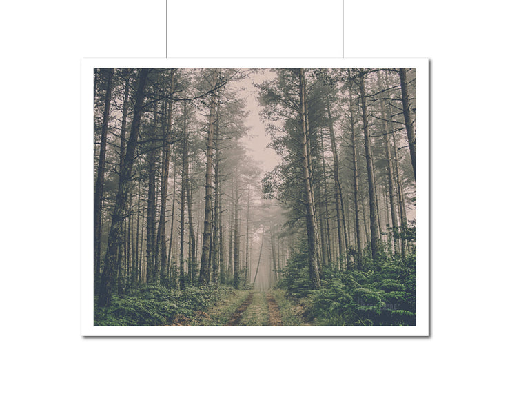 Nature Photography | Landscape Wall Art
