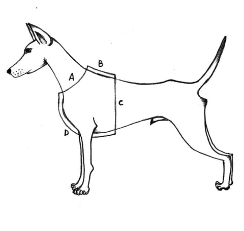 measure for dog harness