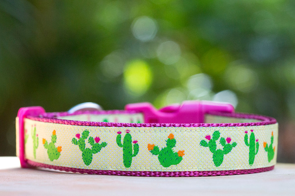 Pink Cactus Dog Collar / XS-XL