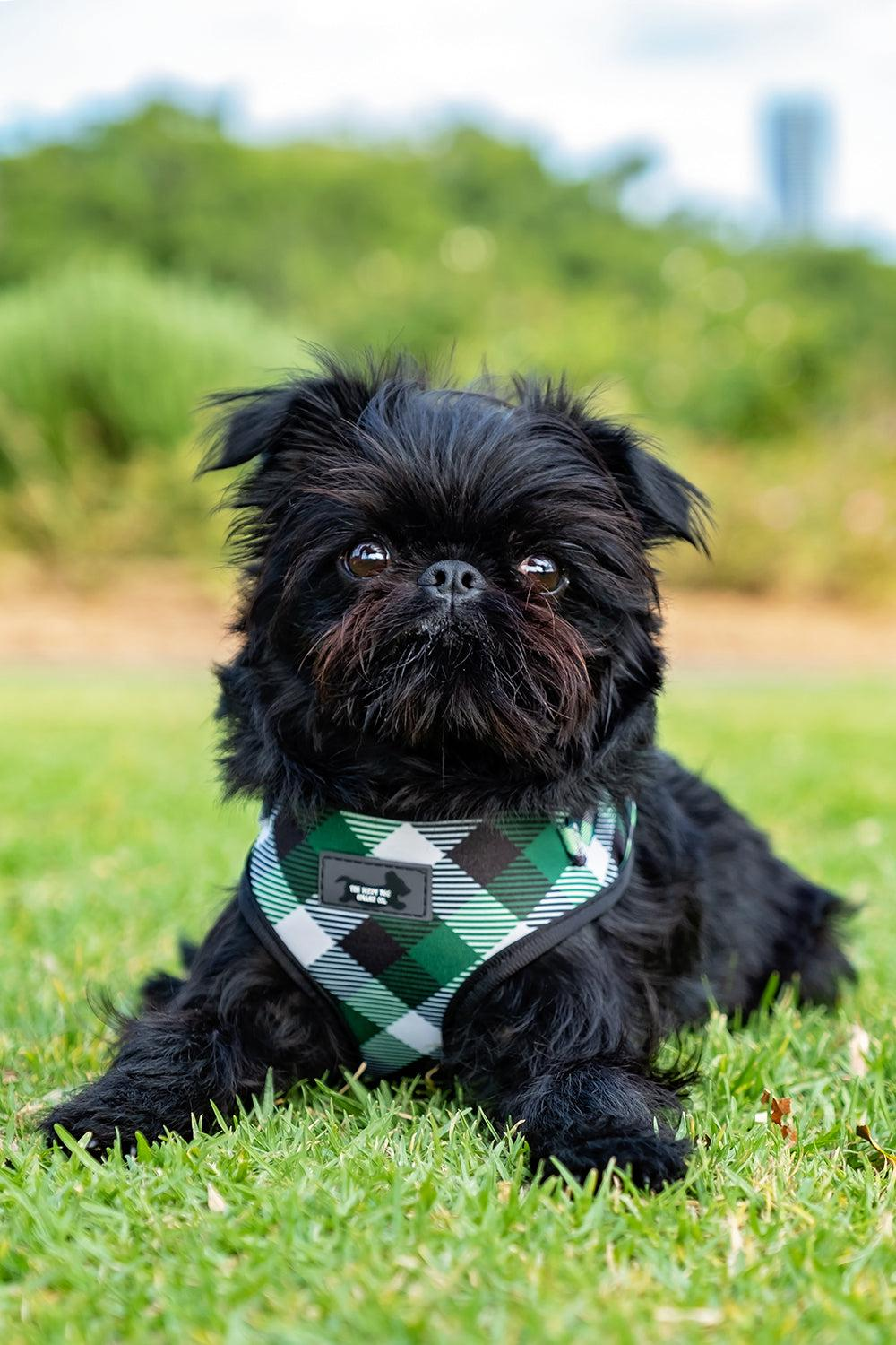 DOG HARNESS - Green Plaid - Neck Adjustable Dog Harness-Harness-Dizzy Dog Collars
