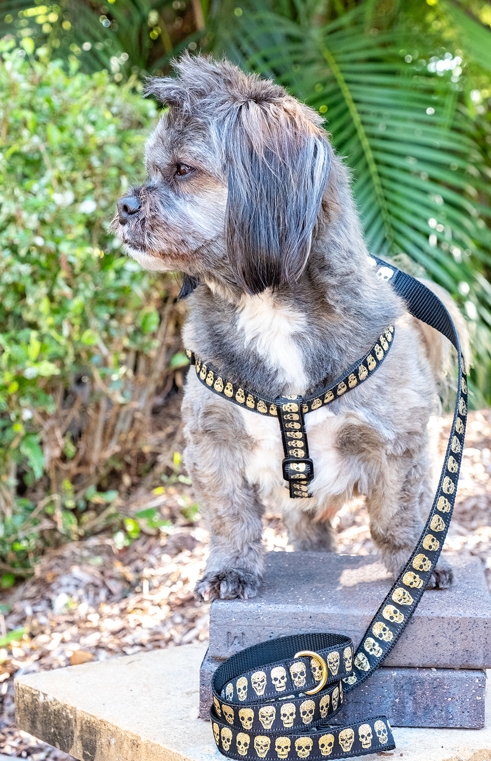 Gold Skulls Step In Dog Harness-Dizzy Dog Collars-00-Dizzy Dog Collars