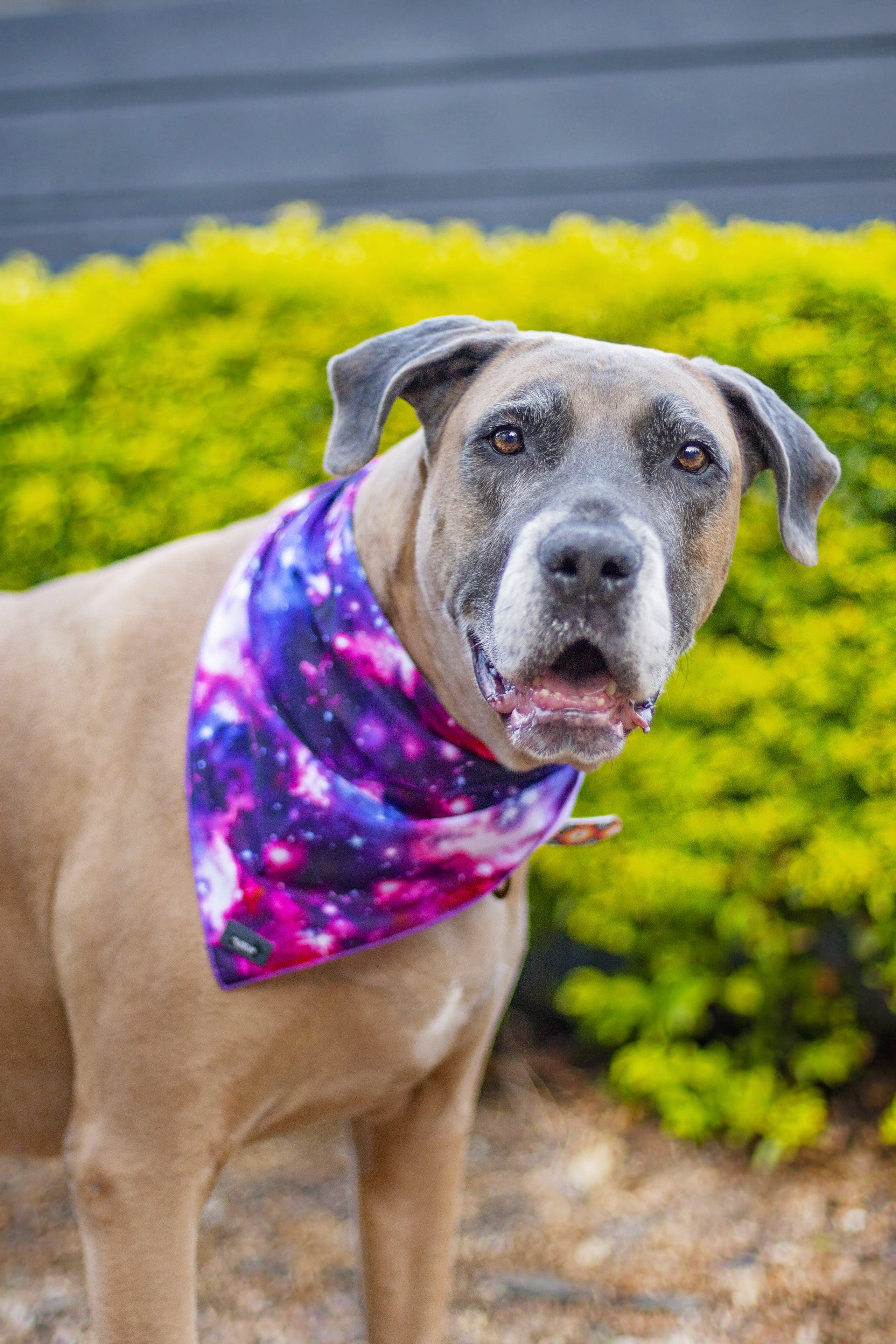 Galaxy - Tie Up Dog Bandana-Dizzy Dog Collars