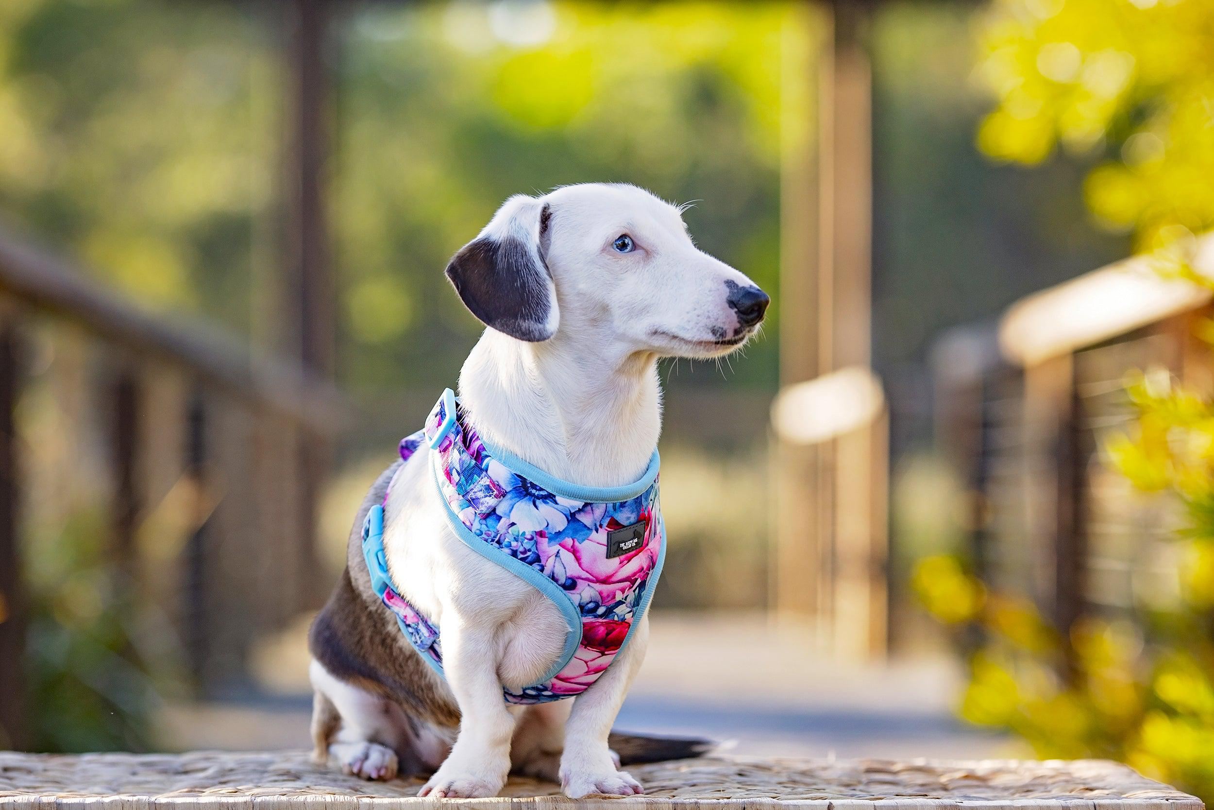 DOG HARNESS - Blossom Rose - Neck Adjustable Harness (Premade)-Harness-Dizzy Dog Collars
