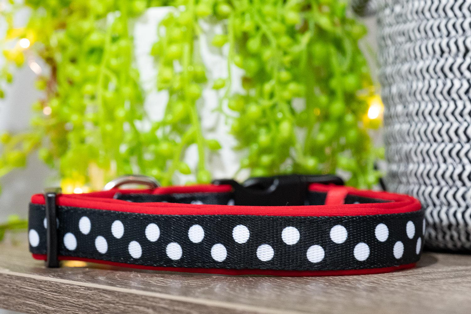 Mr Spotty Dox Dog Collar (Neoprene)-Dizzy Dog Collars-Dizzy Dog Collars