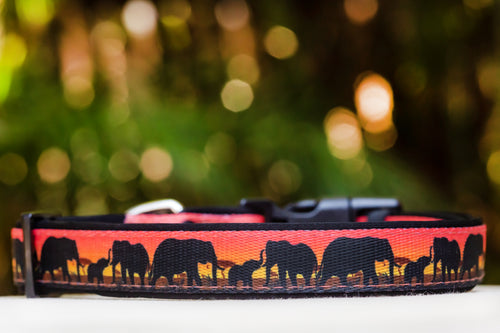 Sunset Elephants Dog Collar (Premade)