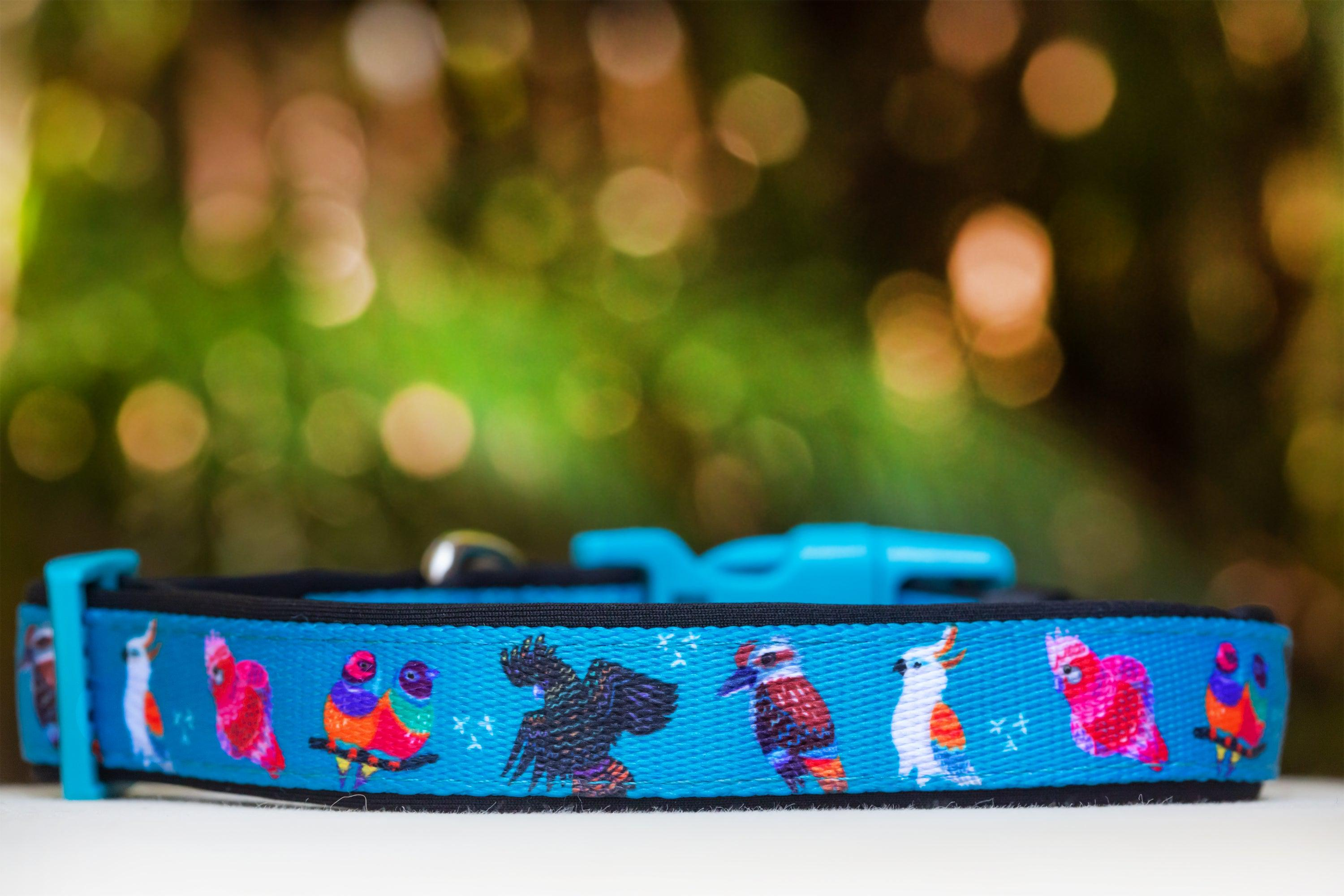 Aussie Birds Dog Collar (Premade)-Dog Collar-Dizzy Dog Collars