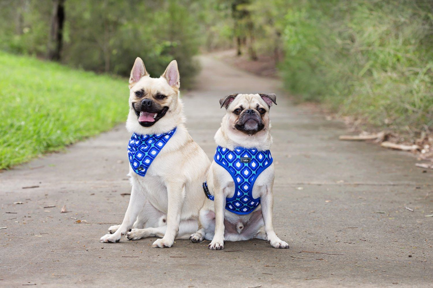 Blue Ikat- Tie Up Dog Bandana-Dizzy Dog Collars