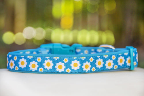 Retro Blue Daisy Dog Collar