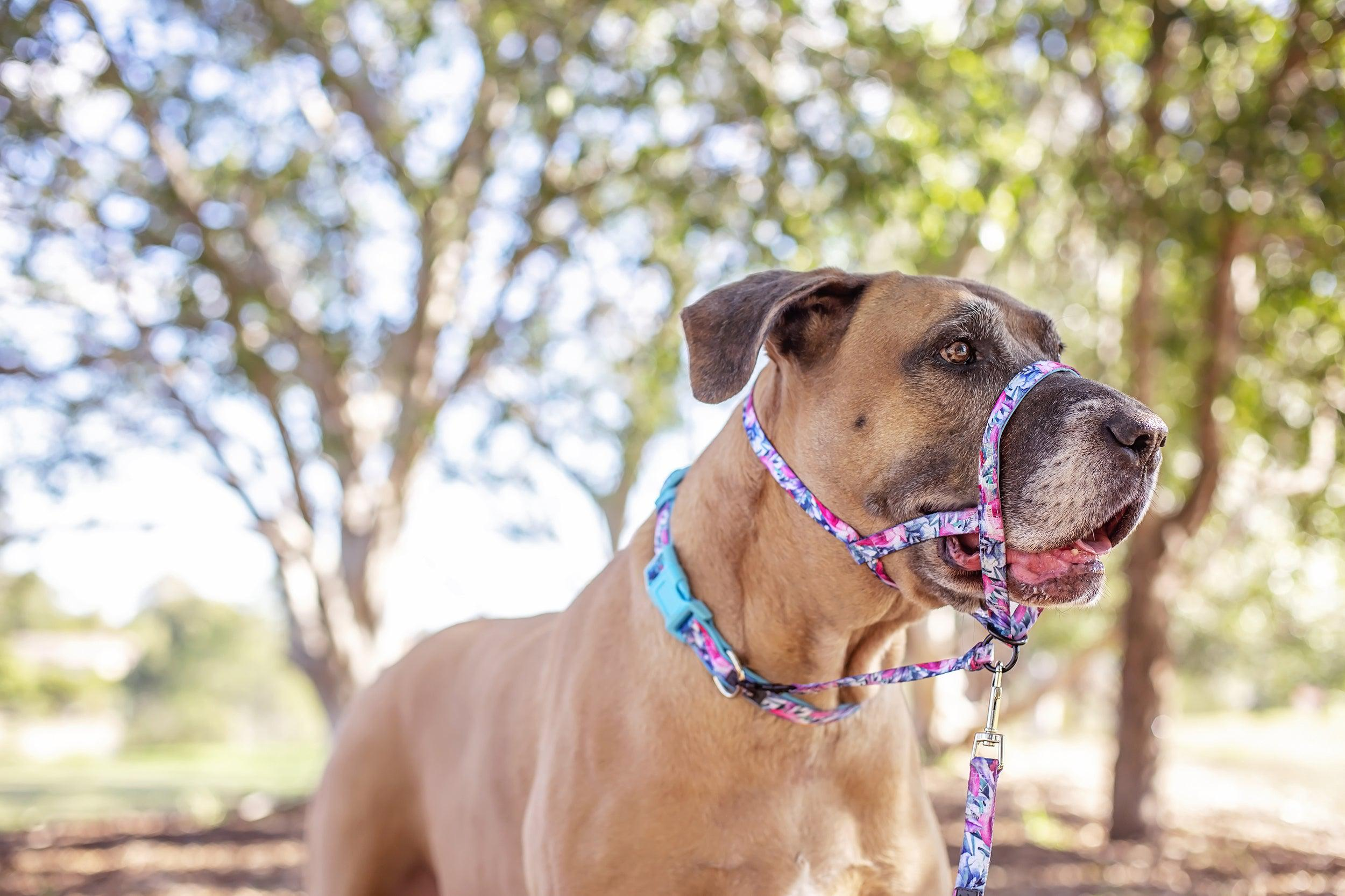 DOG HEAD HALTER - Dog Head Collar - Blossom Rose-Harness-Dizzy Dog Collars